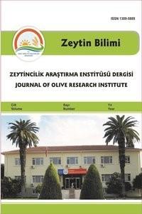 Zeytin Bilimi